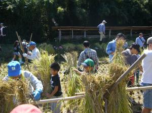 『『『H28.10稲刈り体験ツアー(1)』の画像』の画像』の画像
