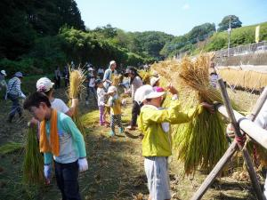 『稲刈り体験(H29.11月)』の画像