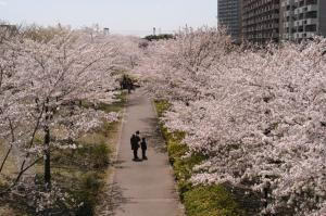 『小松川千本桜(2)』の画像