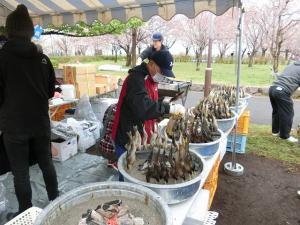 『千本桜まつり2019(1)』の画像