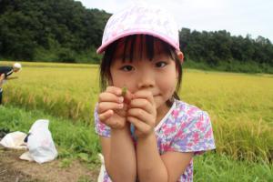 『2019稲刈り磯野(3)』の画像