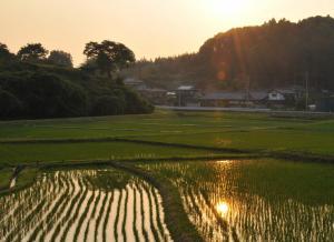 『田植え後の夕日』の画像