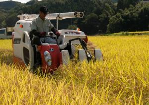 『稲刈りの様子』の画像