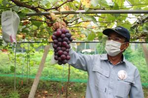 『大きな葡萄』の画像