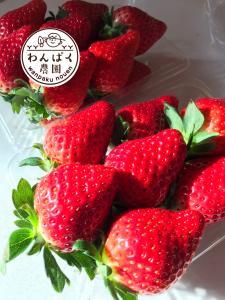 『わんぱく農園の苺』の画像