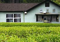『『一茶園』の画像』の画像