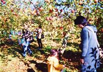 『『渡辺観光果樹園』の画像』の画像