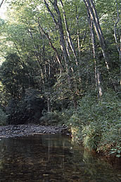 皇都川とケヤキ林